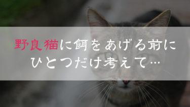 野良猫に餌をあげる人にやって欲しい事!保護しろとは言わないが