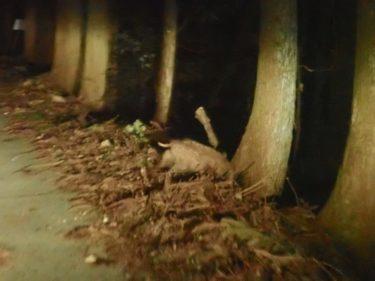 四国歩き遍路日記24日目:こんにゃく芋掘りイノシシ夜空の恐怖体験…