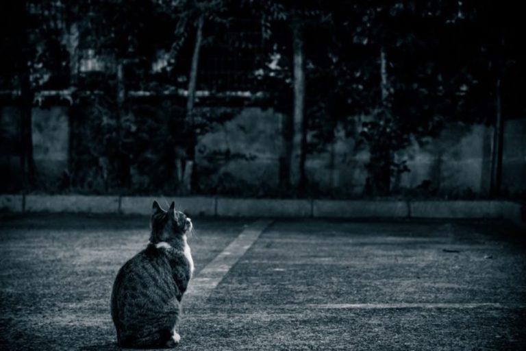 野良猫-05