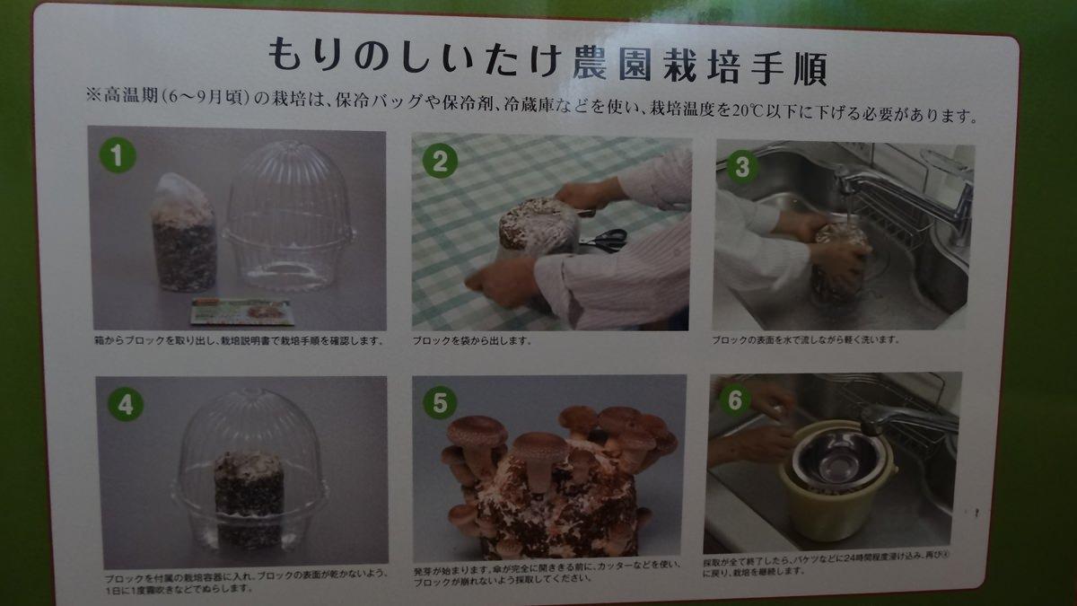 シイタケ栽培キット-04